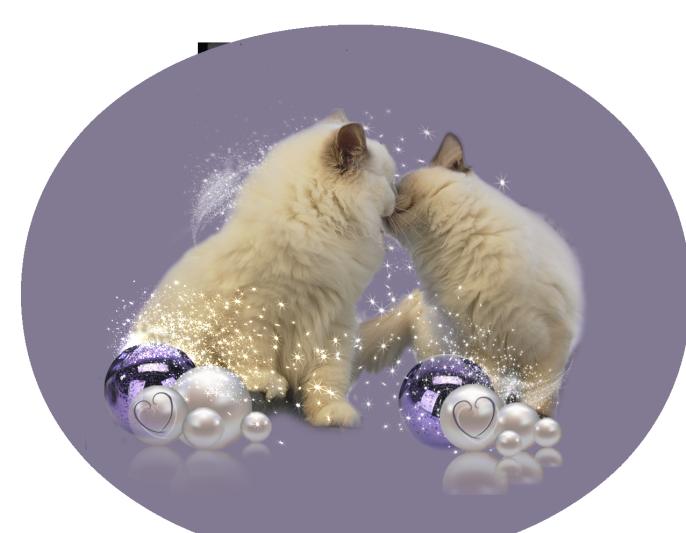 Kitten_HP2d
